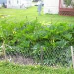 garden1-150x150